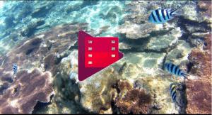 Vidéos Snorkeling