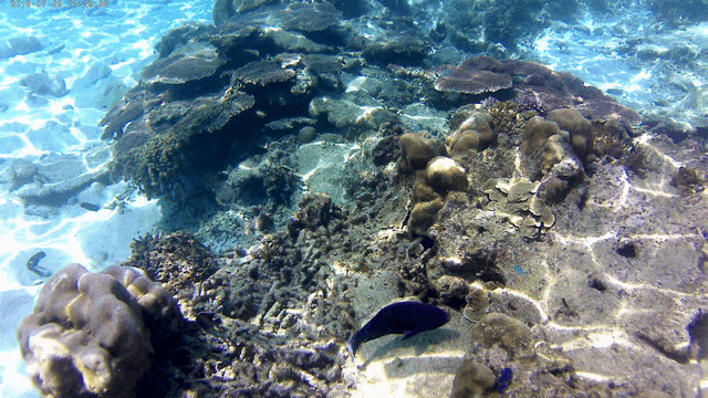 Snorkling18