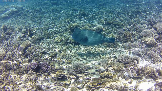 Snorkling20