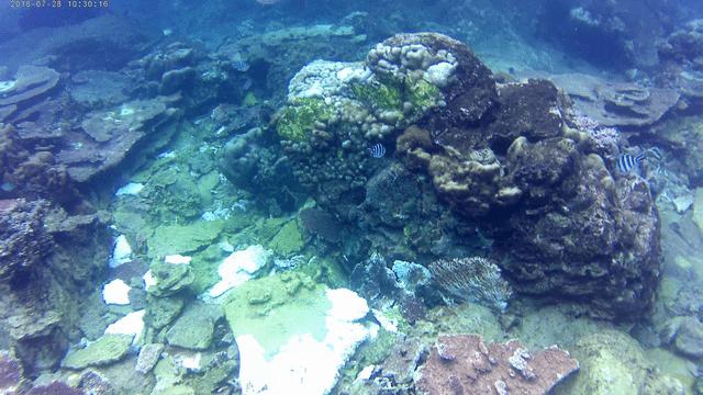 Snorkling26
