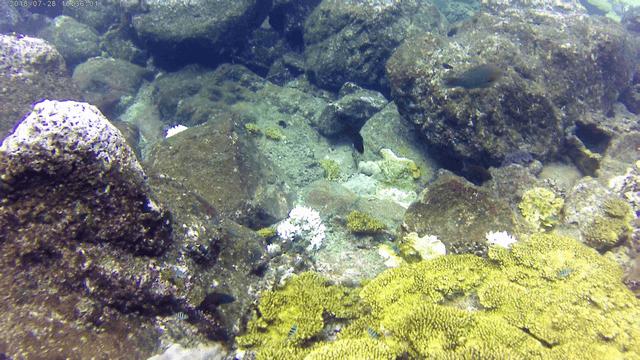 Snorkling34