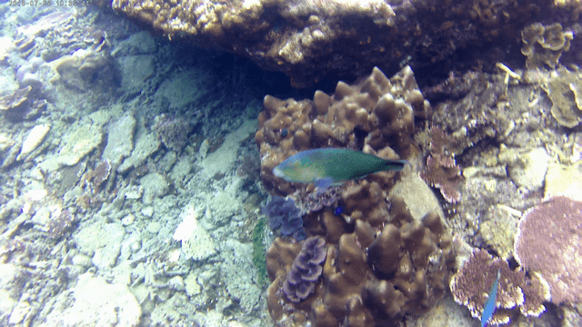 Snorkling36