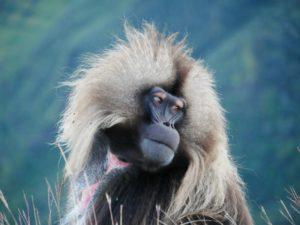 ethiopie-2019-simiens
