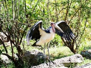 ethiopie-2019-awassa-oiseaux