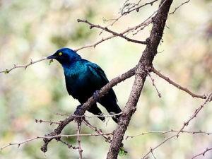 ethiopie-2019-awassa-oiseaux-divers